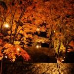 紅葉ライトアップ 2013